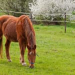 Vets Discuss Developments in Endocrine and Metabolic Conditions in Horses