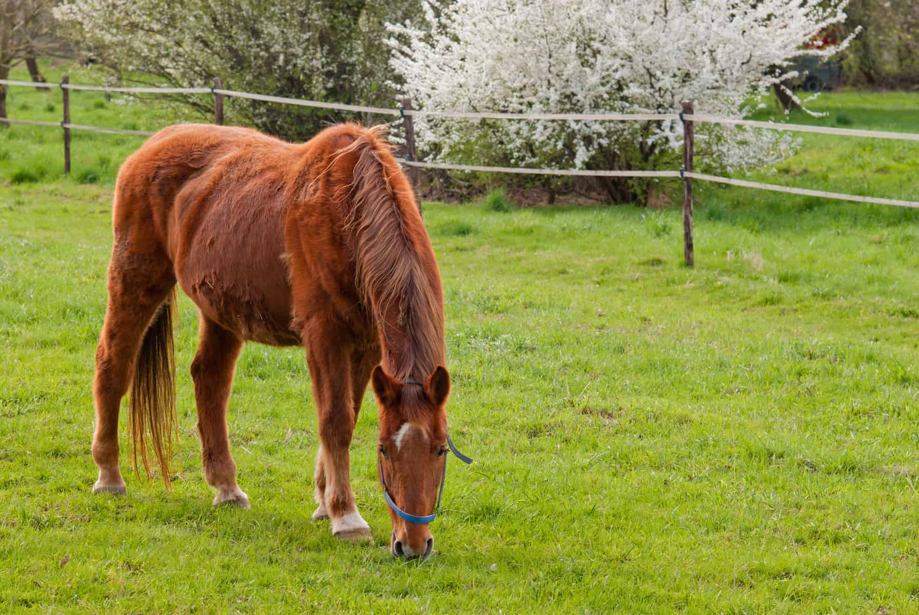 Decreased Bone Density and PPID in Horses: Is There a Link? – The Horse