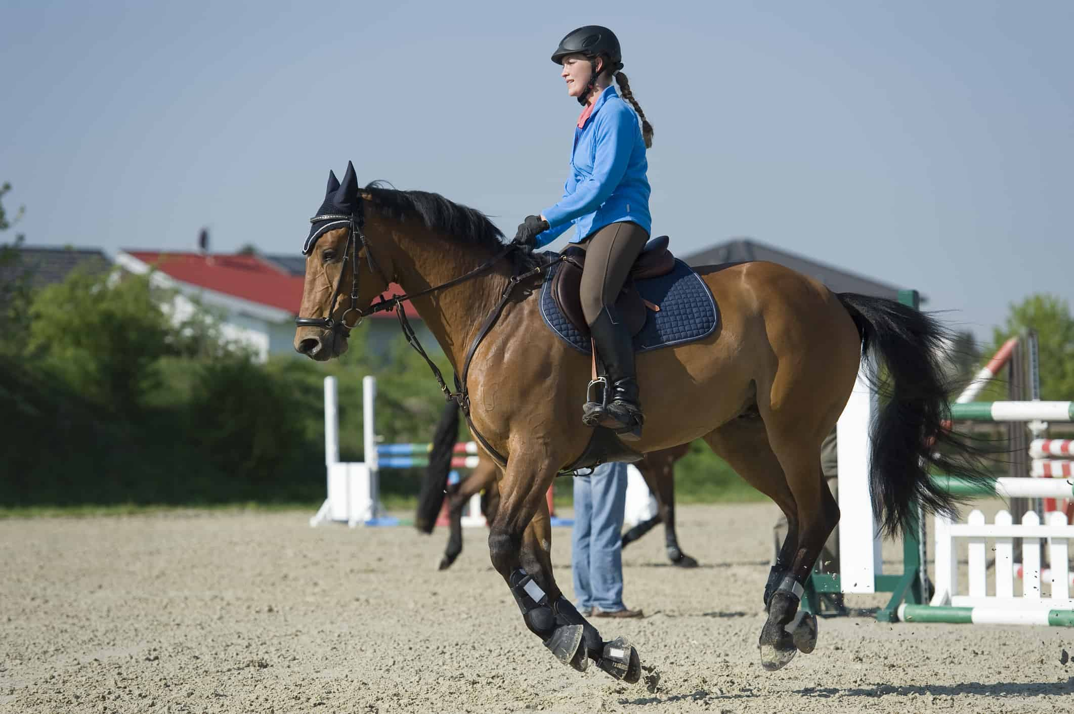 Diet, Exercise Can Help Some Horses with Type 2 PSSM – The Horse