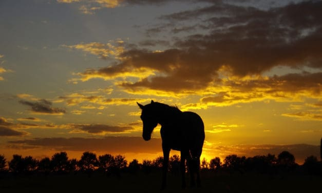 Homeless Horses: An Update on Unwanted Horses in the United States