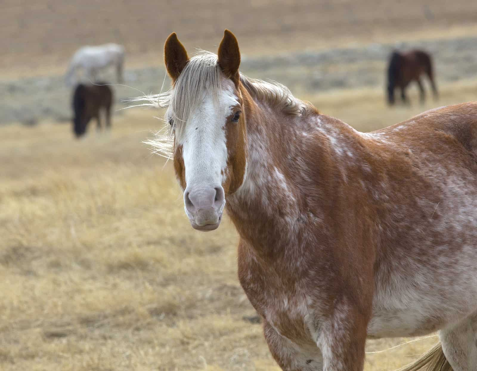Preservation Of Rare Horse Breeds The Horse
