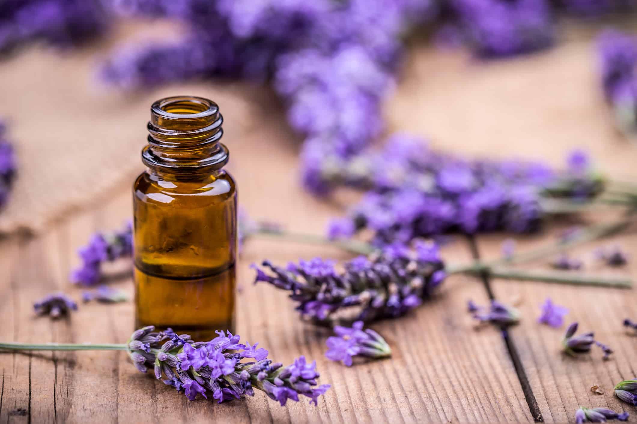 lavender calms horses