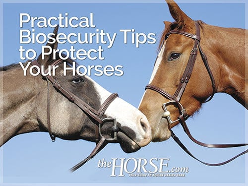 Practical Biosecurity Tips to Protect Your Horses