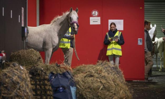 Horses Arriving for 2018 WEG in Tryon
