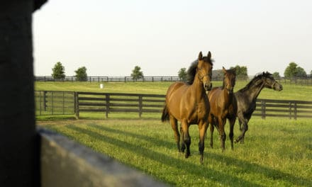 Can a Supplement Help Delay Arthritis Onset in Young Horses?