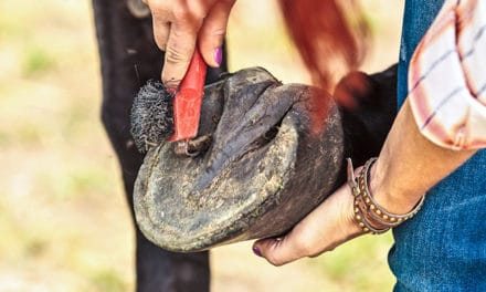 Horses Sans Shoes: The Facts on Bare Feet