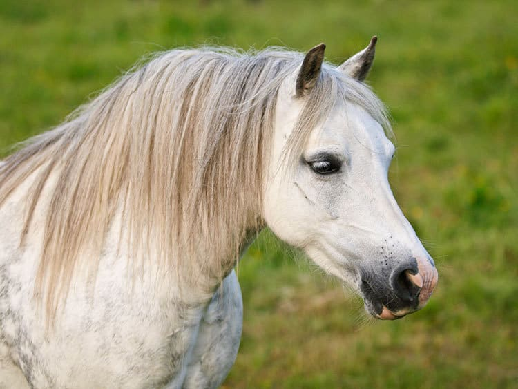 Feed the Breed: Ponies