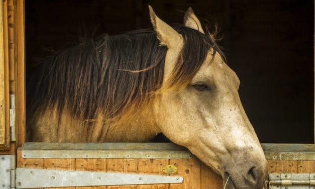 <em>The Horse</em>, Boehringer Ingelheim Partner for Gastric Ulcer Awareness Month