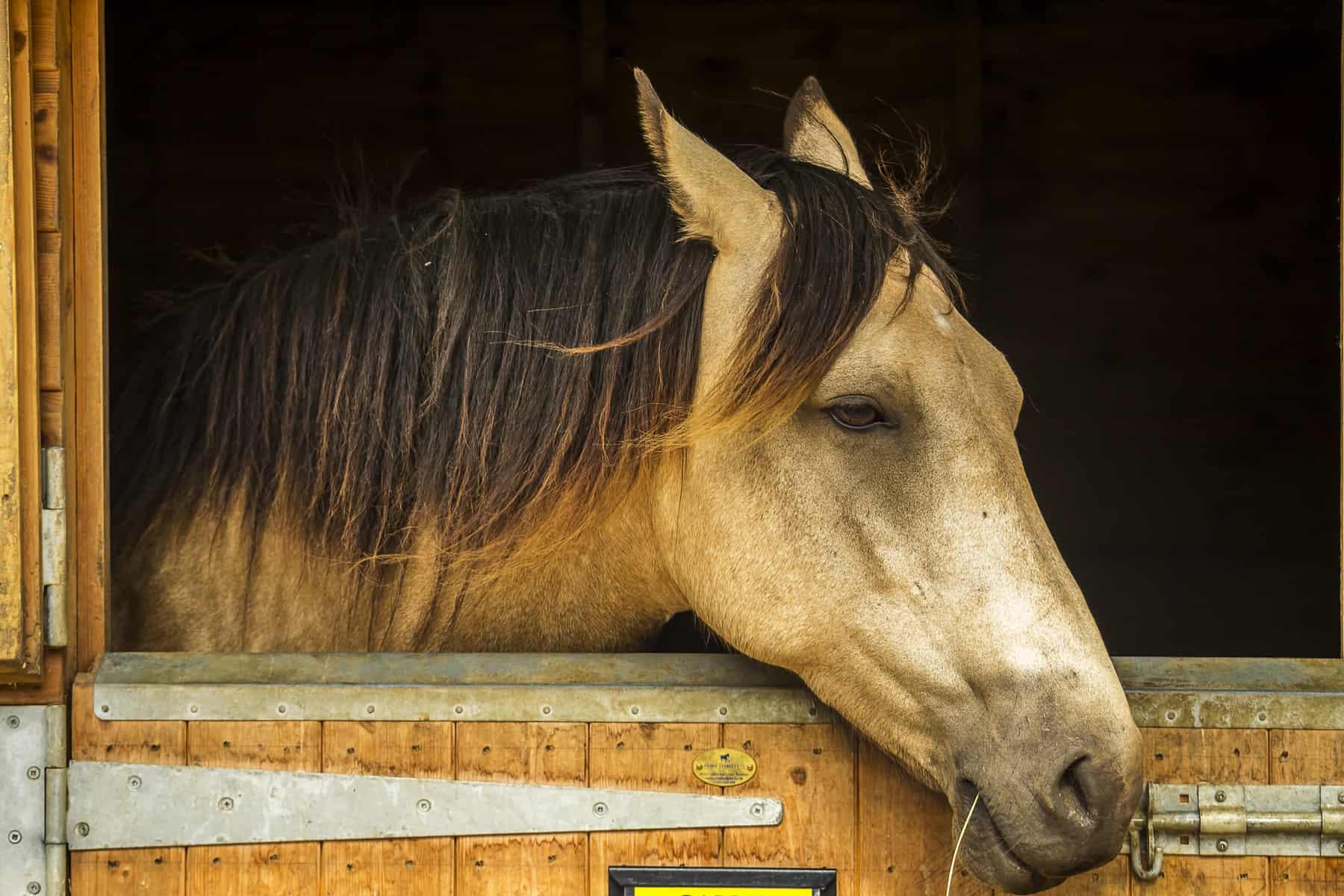 The Horse, Boehringer Ingelheim Partner for Gastric Ulcer Awareness Month