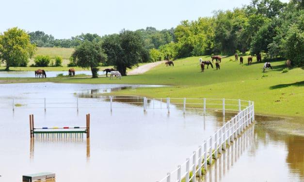 Preparing Horses for Severe Weather
