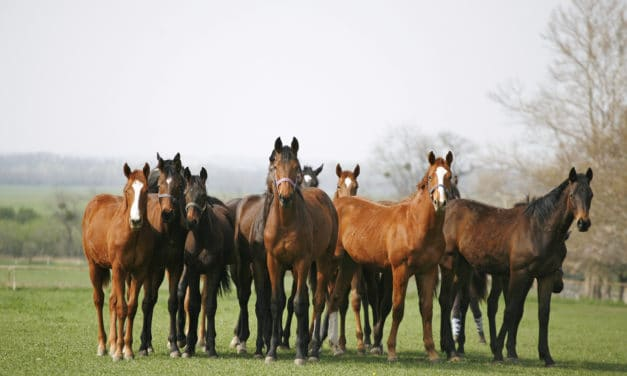 OCD: Causes in Young Horses and Long-Term Impact