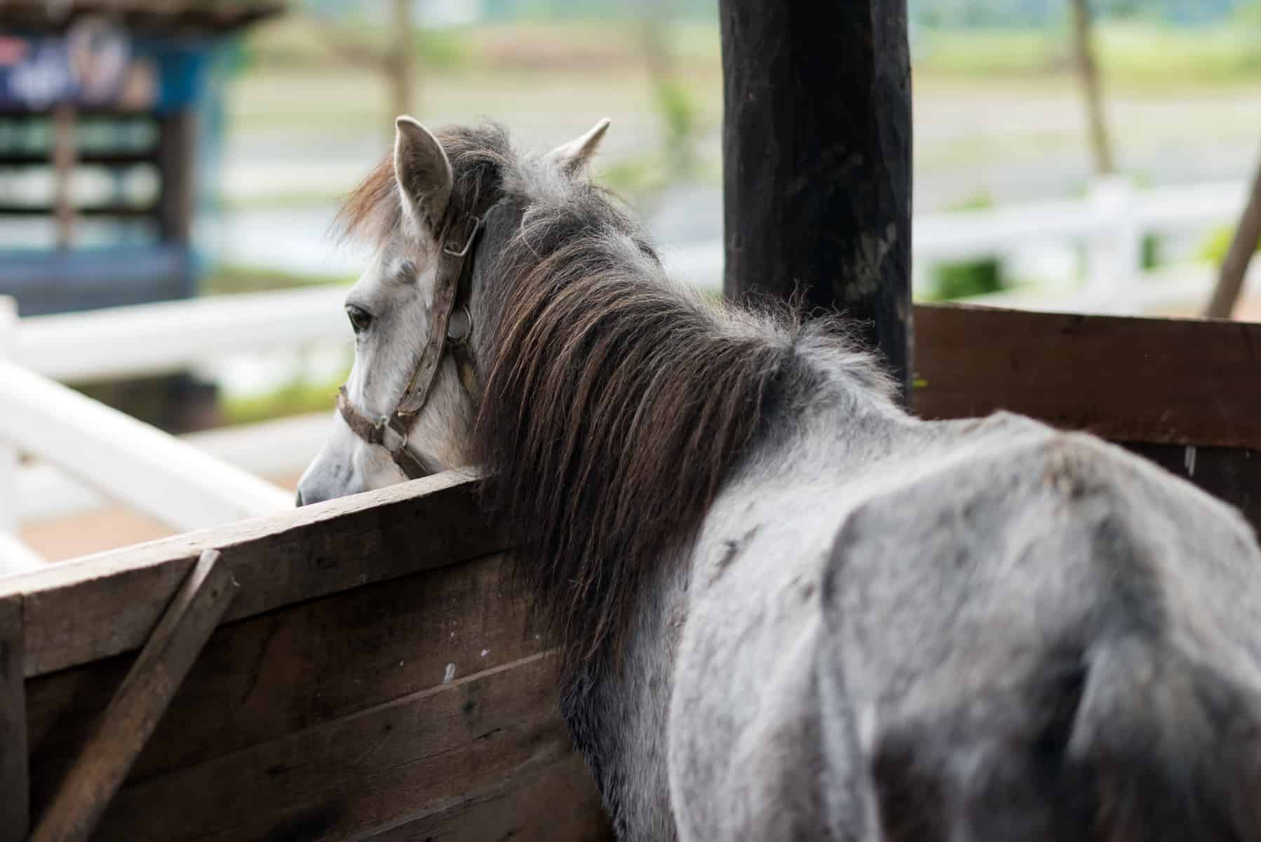starting a horse rescue