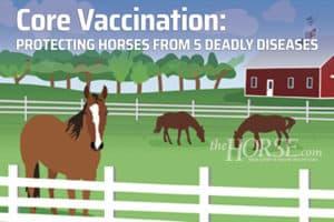 Vacinação básica: protegendo cavalos de 5 doenças mortais