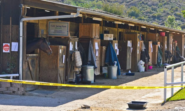 Exposed: Practical Lessons from a Real-Life Equine Infectious Disease Outbreak