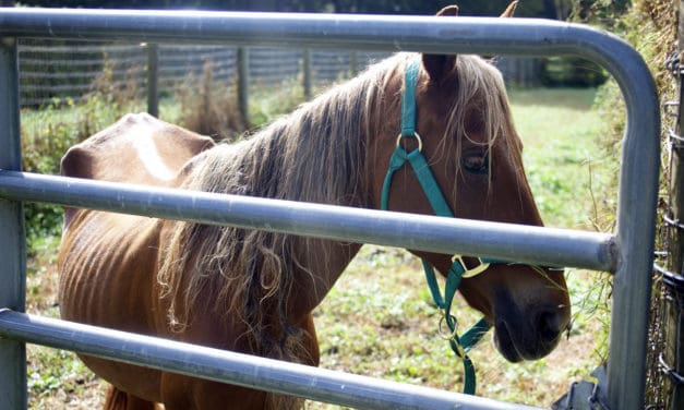More Than Two Dozen Horses Removed From Florida Farm