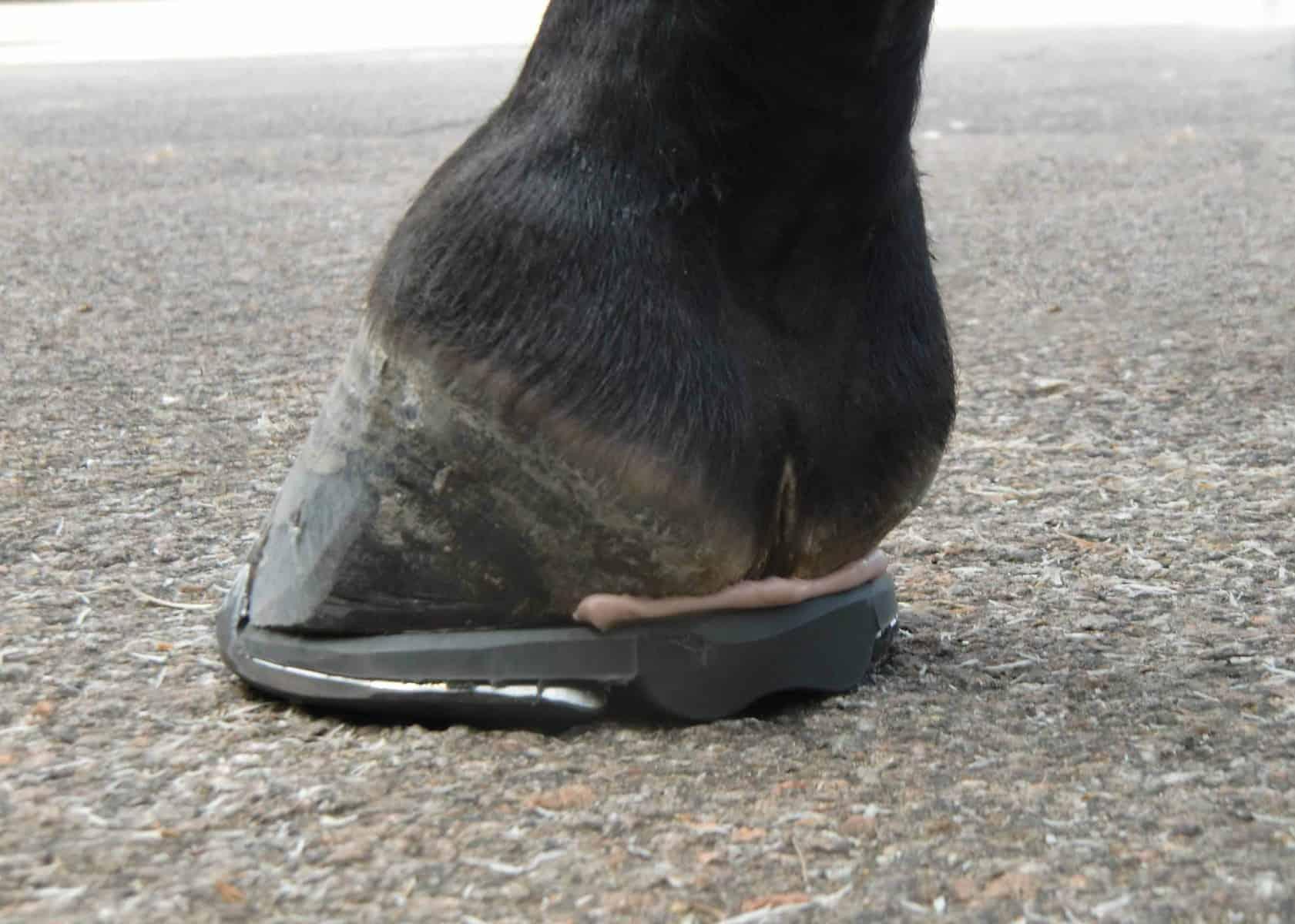 sapateando o cavalo de salto baixo