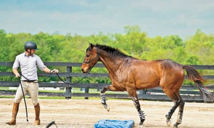Groundwork With Our Horses: Why We Do It