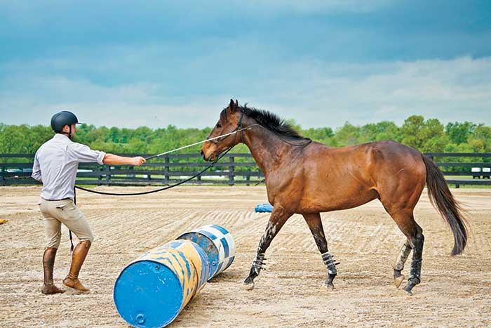 Groundwork with Horses: Why We Do It