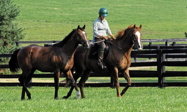 Back to Work: Transitioning Horses Into an Exercise Program Safely