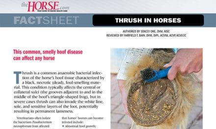 Fact Sheet: Thrush in Horses