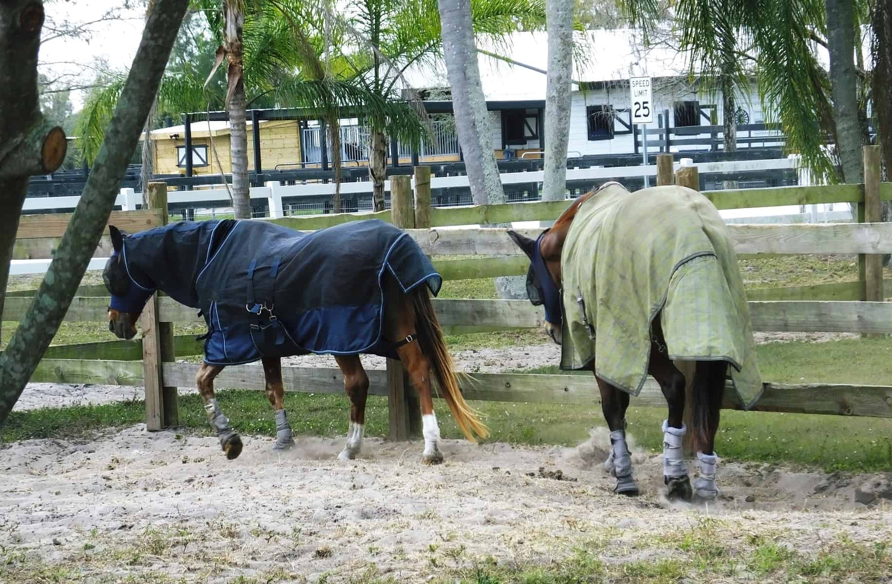 Horses wearing fly sheets