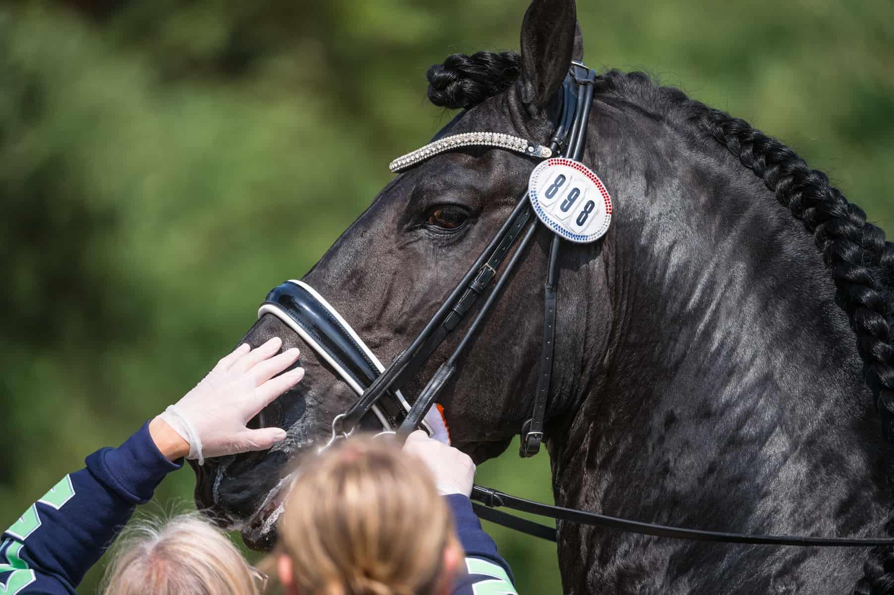 Conteúdo relacionado: Welfare Over Winning: Protegendo o bem-estar do cavalo Show