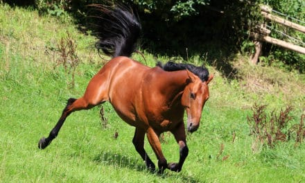 Has Your Horse Been Exposed to a Parasite That Causes EPM?