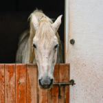 Is Your Horse Hurting?