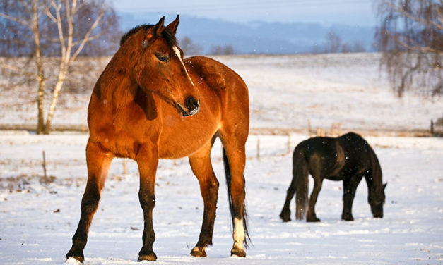 Running Hot and Cold: Caring for Horses During Weather Changes