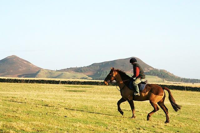 Aplicação de técnicas de reabilitação de tendões humanos a cavalos