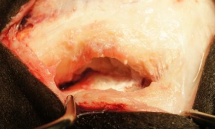 Suspensory Ligament Branch Tears in Racehorses: Surgery and Outcome