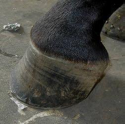 gerenciamento de equilíbrio de casco de cavalo e distorção de cápsula
