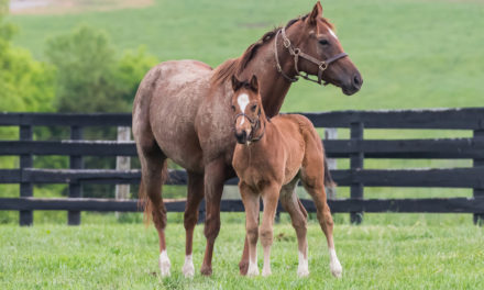 What is a Foundation Mare?