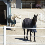 What Does Vitamin Deficiency in Horses Look Like?
