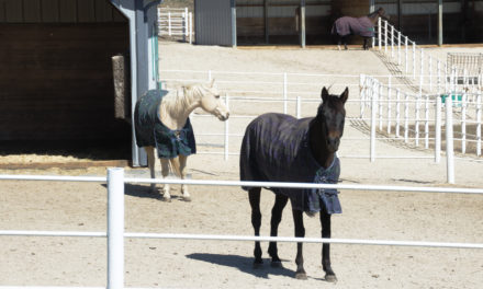 Supplementing Horses With Vitamin E