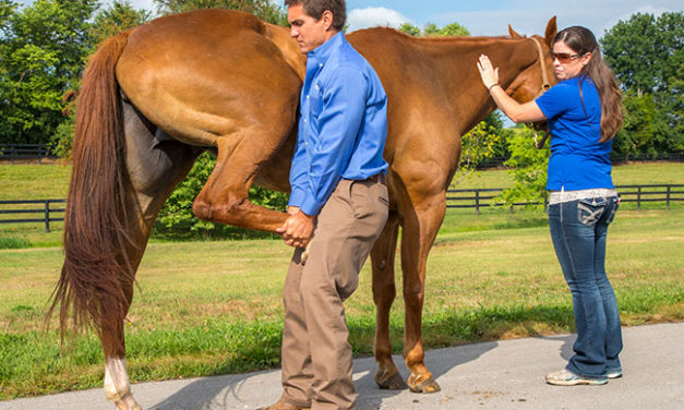 Diagnosis: Equine Joint Disease