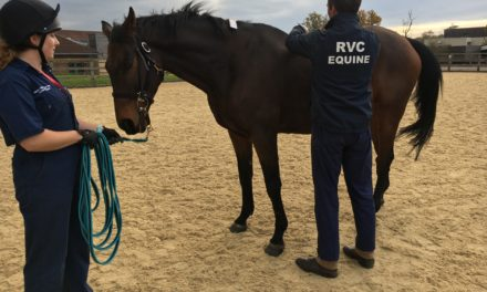 How to Measure Back Pain in Horses