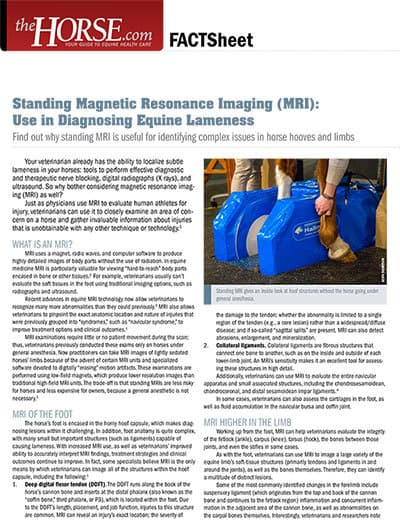 Standing MRI: Use in Diagnosing Equine Lameness