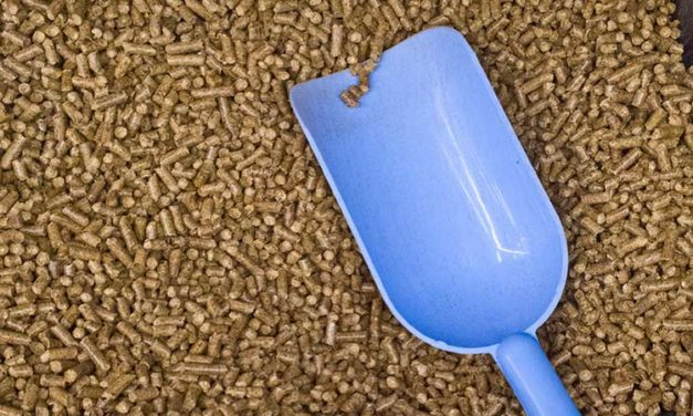 Why Are Performance Horse Feed Servings So Big?
