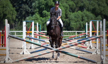 Do Horses Have Muscle Memory?