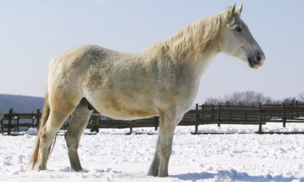 Caring for Old Horses
