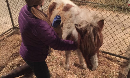 How Veterinarians, Students, and Volunteers Saved Horses During a Deadly Wildfire