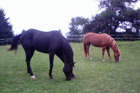 Is Your Horse an optimist