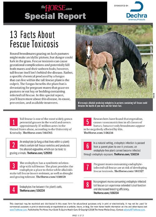 Special Report: 13 Facts About Fescue Toxicosis