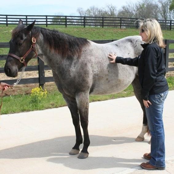 body condition scoring horses