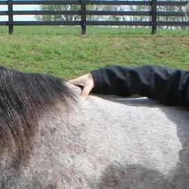 condição corporal marcando cavalos