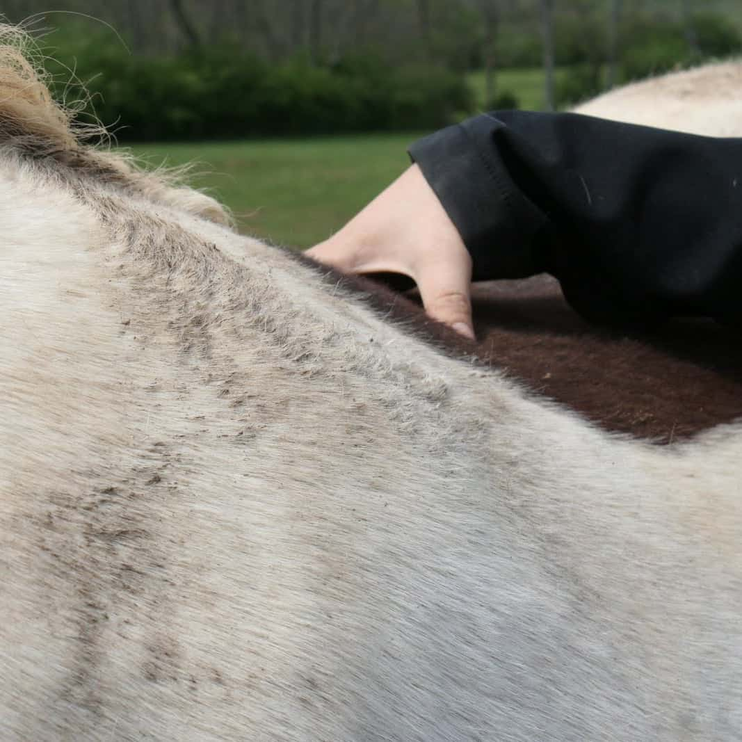 my horse is too fat