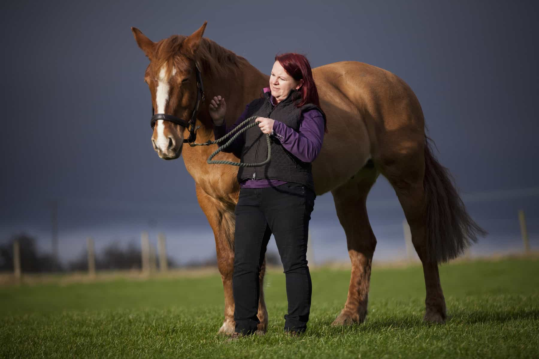 Laminitis As Common As Colic In British Horses Study