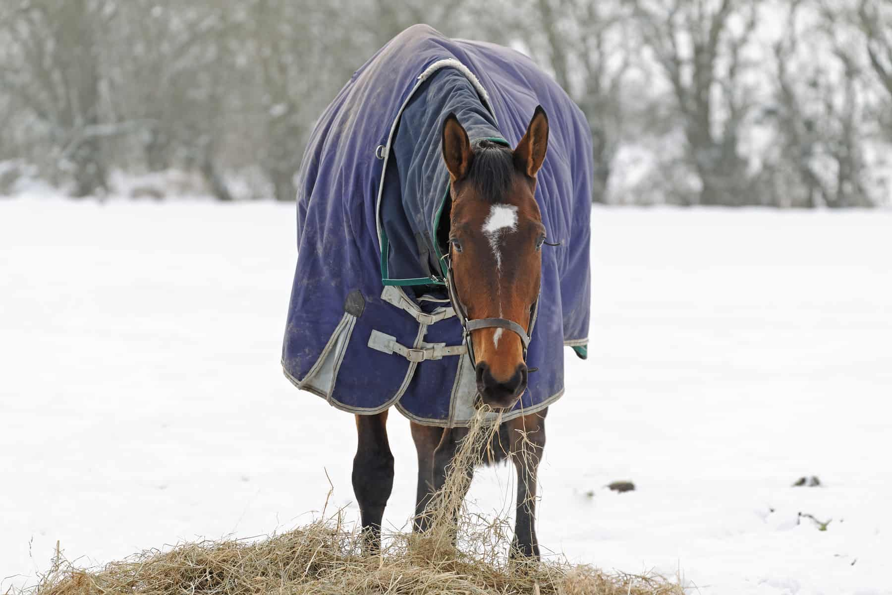 caring for horses in winter