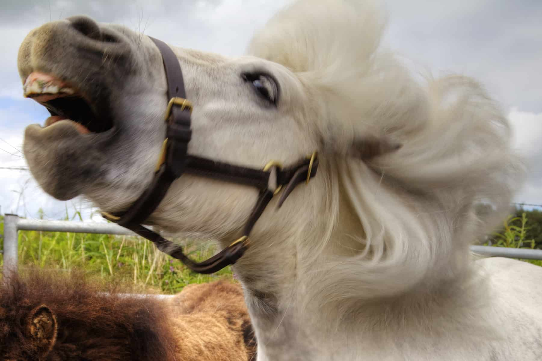 Animal Electrocuted Porn headshaking in horses: a sensitive matter – the horse